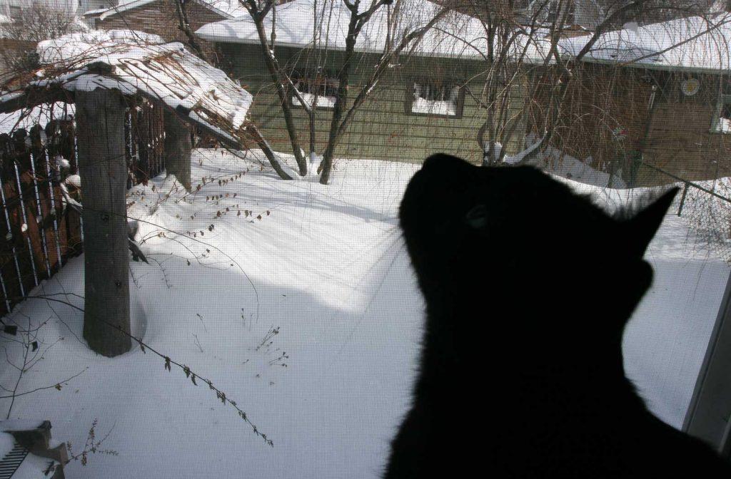 Oleś watching snow