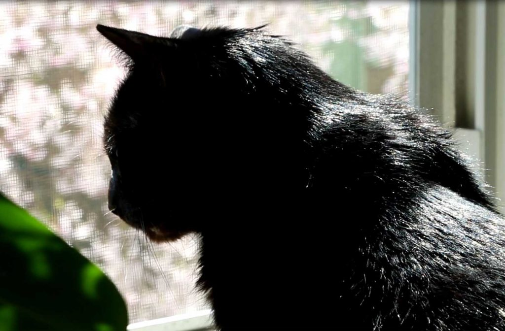 Oleś back at the window