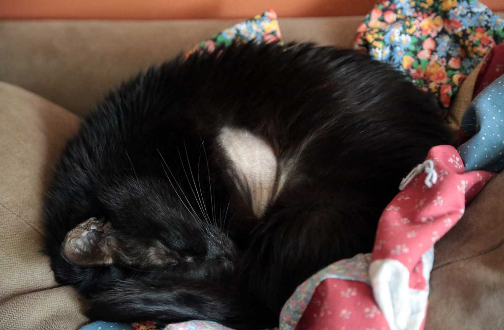 Oleś sleeping—he was not able to curl up like this for some time.