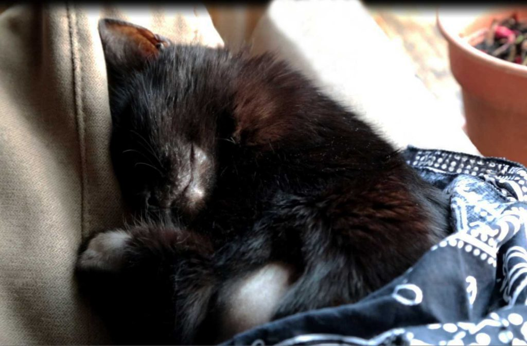 Oleś feeling better with each day... and sleeping better.