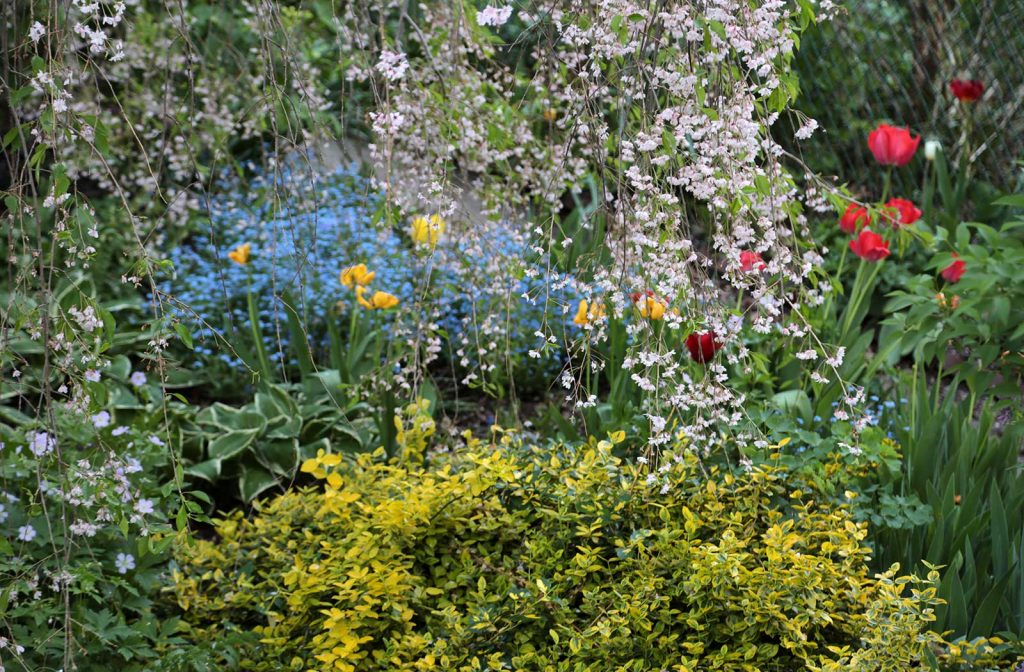 Oleś's garden—his view into the backyard in Spring 2015